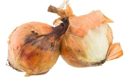 Removing Mold: The Moldy Onion