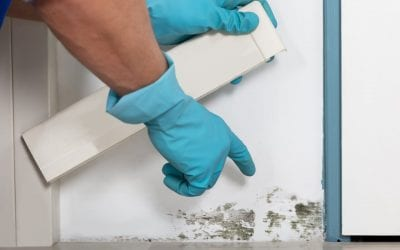Signs of Mold in the Home